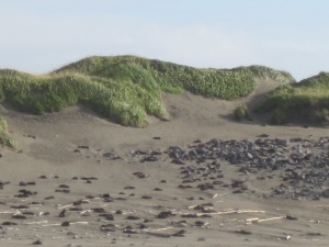 hillside of seals