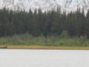 see the eagle on the log? the edge of the glacier is behind those<br /><br /> trees