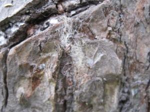 IMG_10008bear hair tree