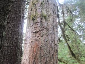 IMG_10054bear scratch tree