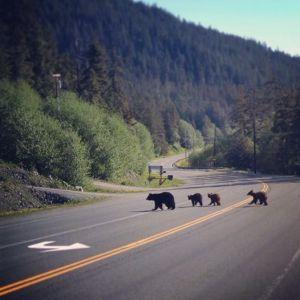bears cx