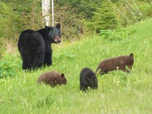 janet year one bears