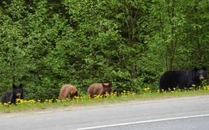 katy bears